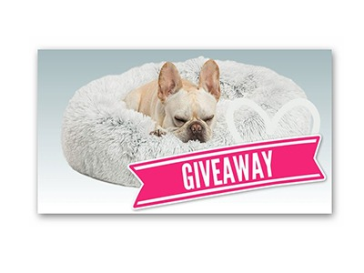 Win a Dog Bed