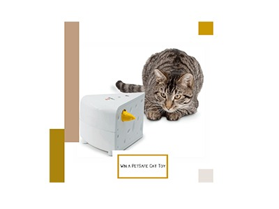 Win an Interactive Cat Toy