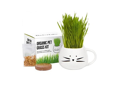 Win a Cat Grass Garden